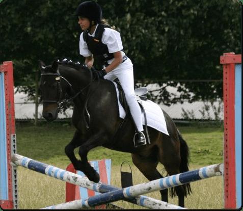 horseben
